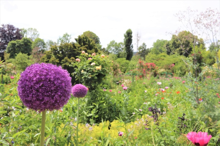 Alliums and poppies in Claude Monet's garden at his home in Giverny
